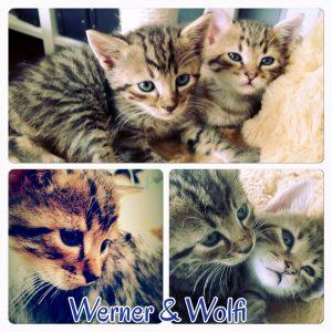 werner_und_wolfi